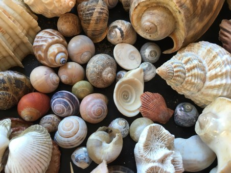 spirals of shells in nature
