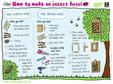 insect hotel activity from wildlife watch
