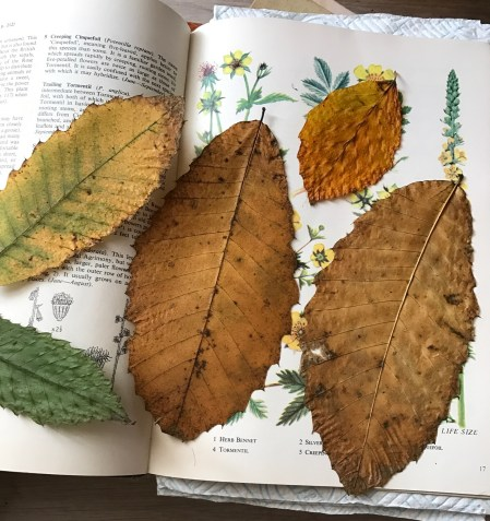 september pressed leaves