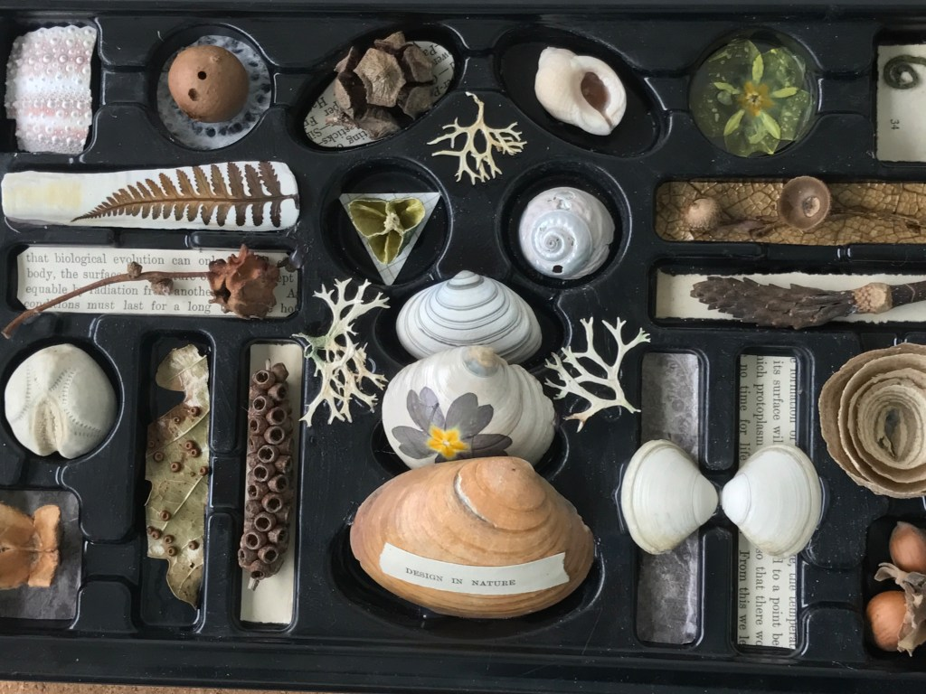 natural collections in a chocolate box display