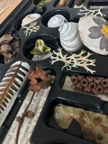 Natural collection in a chocolate box insert