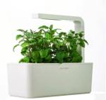 cheap smart garden