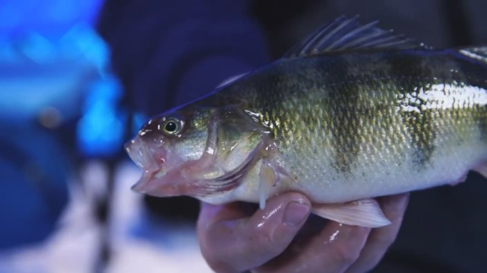 Devils Lake Ice Fishing Guide
