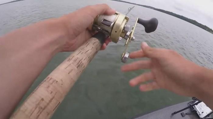 Fish Feeding Times