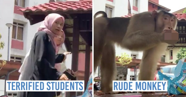 Monkey Photobombs M'sian Students' Video, Steals Keropok & Makes A Rude Sign, & Twitter Reactions Are Funny AF