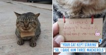 Kitty Goes Missing From Home For 3 Days, Comes Back With 'Mackerel Debt' For Owner To Pay