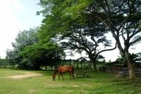 singapore farms