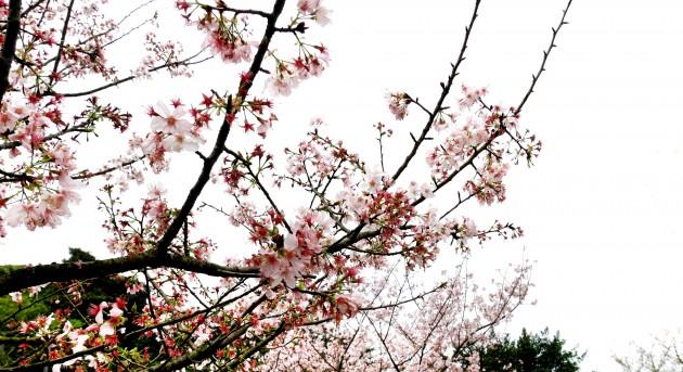b2ap3_thumbnail_P1010203-copy.jpg