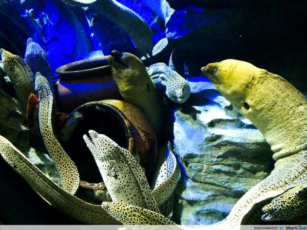 SEA-aquarium-RWS-1.jpg