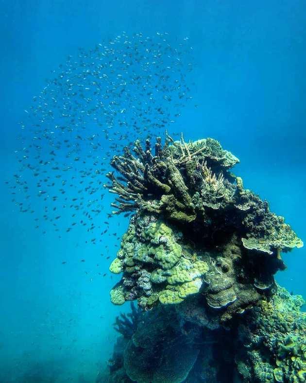 dilumacard islands diving