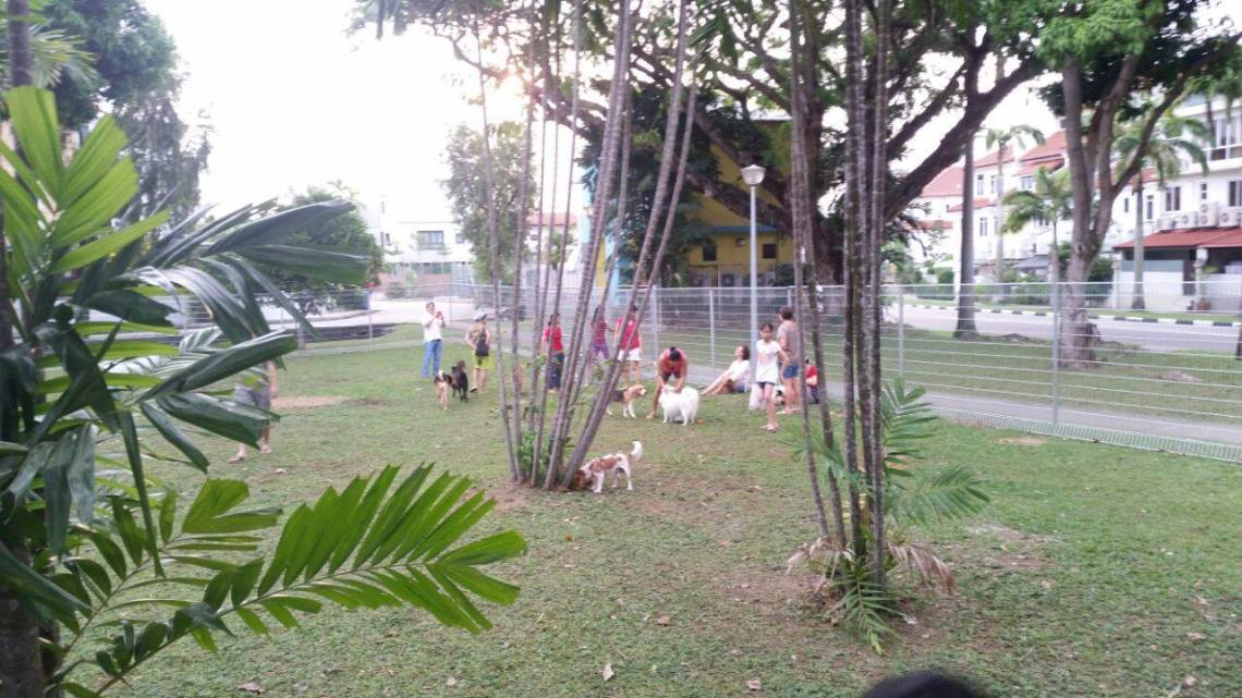 Dog runs Singapore - mariam way god run park playground estate