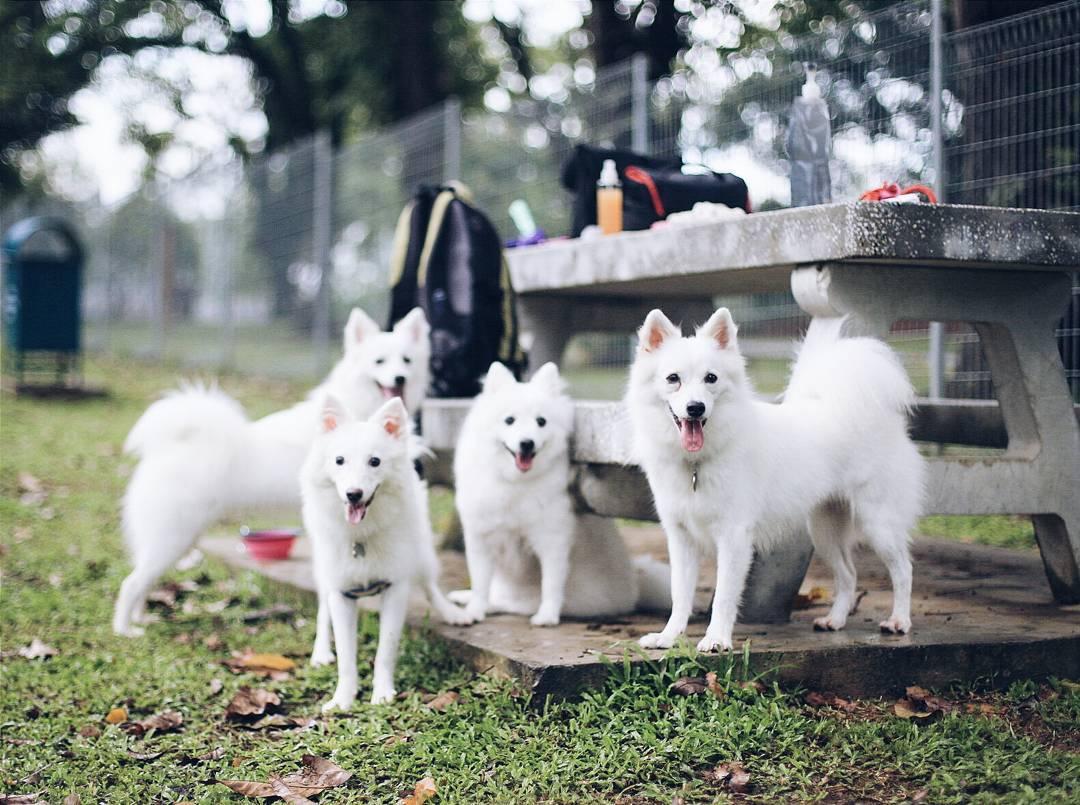 Dog runs Singapore - sembawang park bench