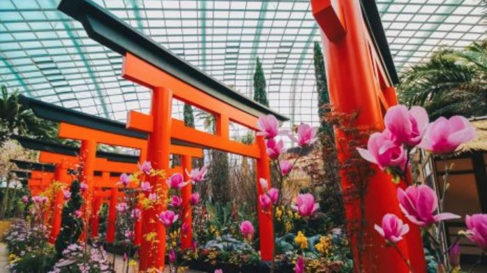 Sakura Matsuri: things to do in March 2020