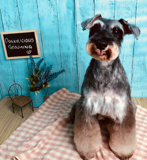 Pet grooming in Singapore - Doggylicious