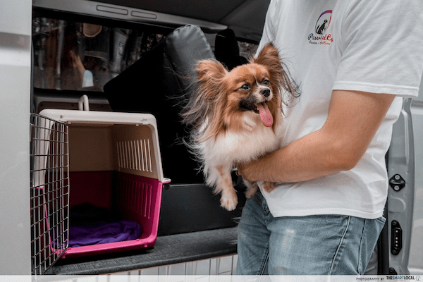 Pet grooming in Singapore - Pawtraits