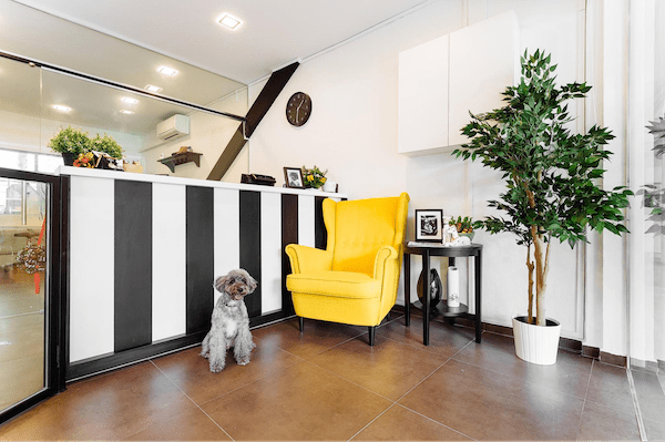 Pet grooming in Singapore - The Wicked Wag