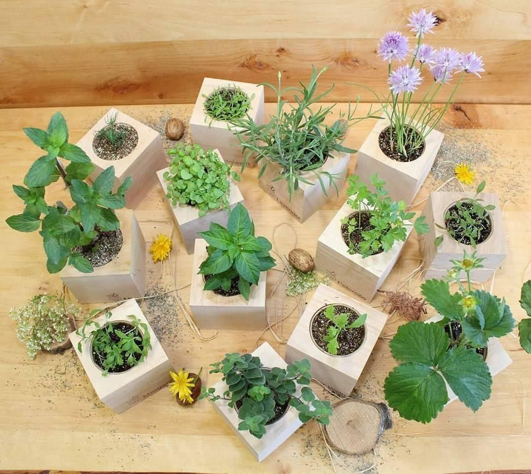 ecocubes plant growing kit