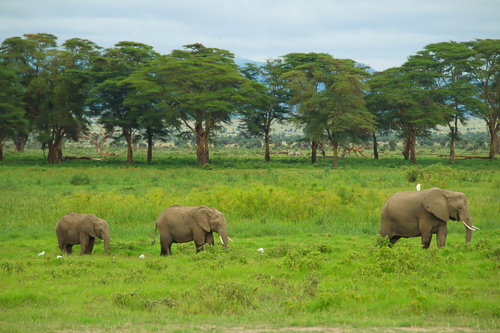 Large adult and two baby elephants in Masai Mara