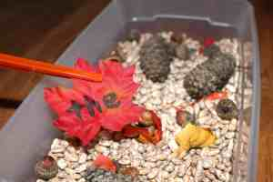 Fall Sight Word Sensory Bin, Mom Explores The Smokies