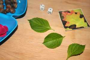 Counting Nature Activity with Printable Nature Cards, Mom Explores The Smokies