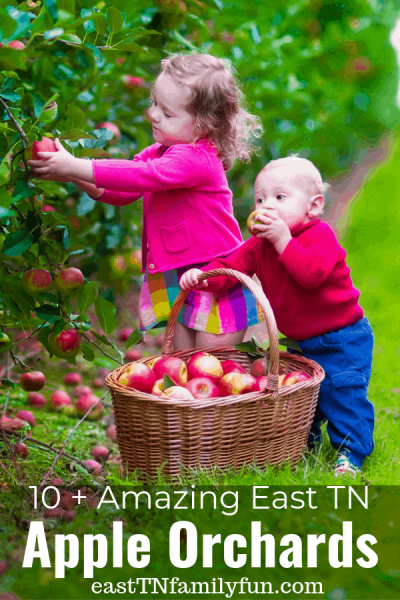 10 + Amazing Apple Orchards in East Tennessee: Knoxville, Chattanooga, Tri-Cities
