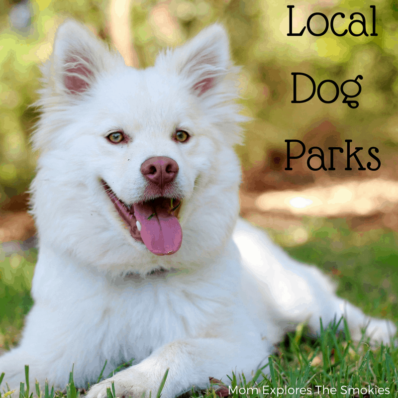 Knoxville and Smoky Mountain Dog Parks, Mom Explores The Smokies