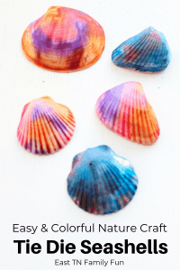 gorgeous ti dye seashell craft is the perfect way to use up all your beach shells, Mom Explores The Smokies