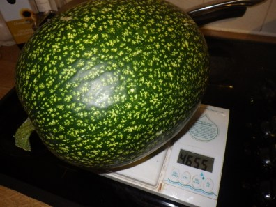 That's 4655g