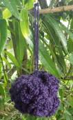 purple puff 2