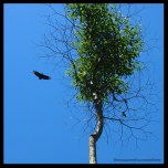 Bird of prey on blue sky