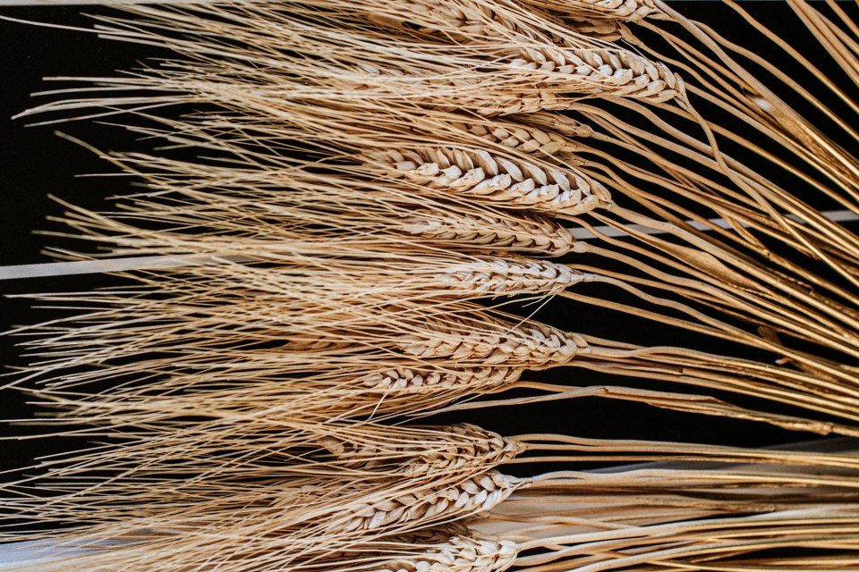 Dried wheat fan decoration for black and white wedding