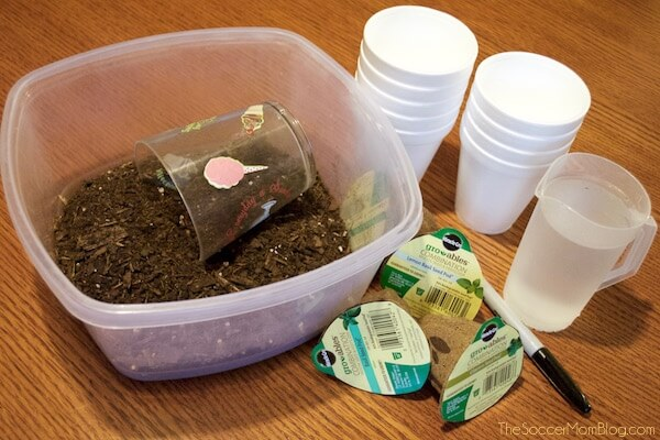 Gardening with kids made simple AND mess-free! Create an indoor herb garden to add flavor to your cooking...even if you don't have a green thumb!