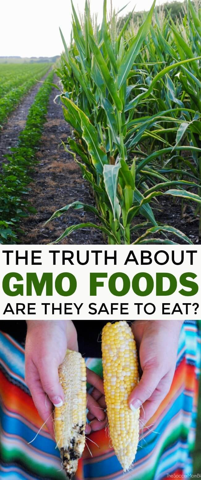 Are GMOs safe to eat? We went straight to the source to find out. What farmers say about genetically modified crops and what you should know before you buy.