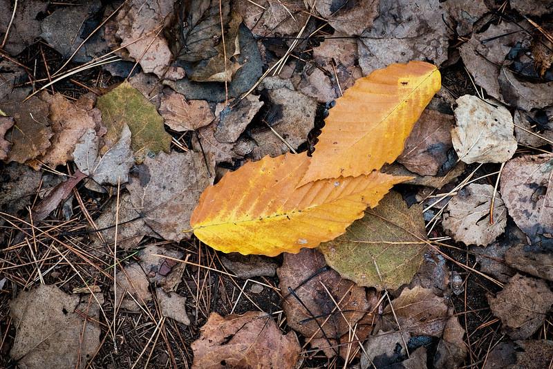 XT10_Leaves