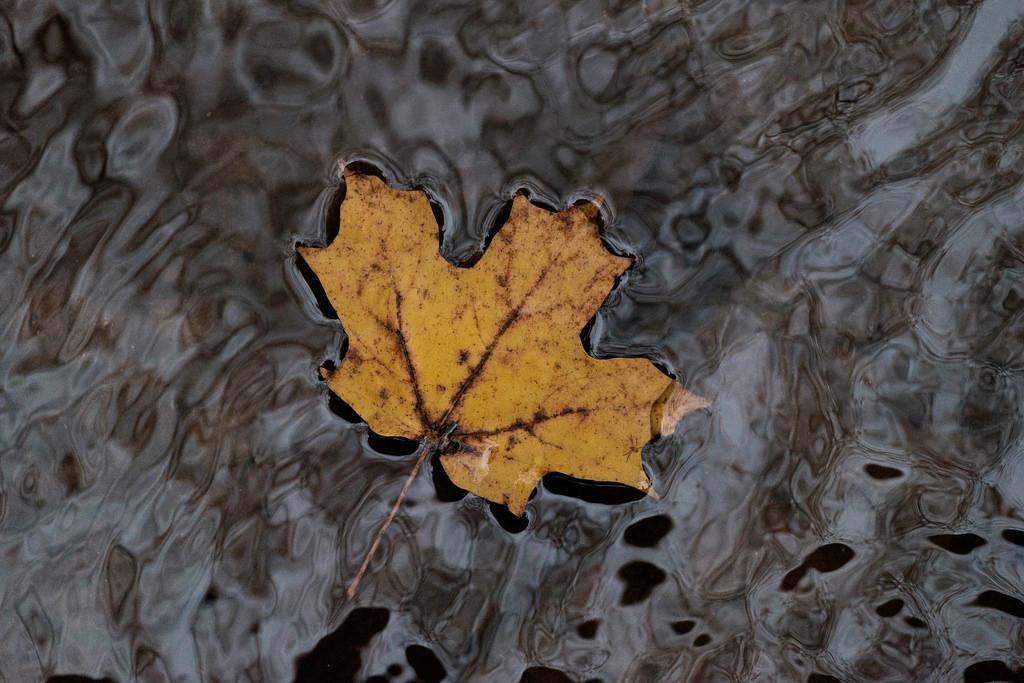 leaf-in-creek