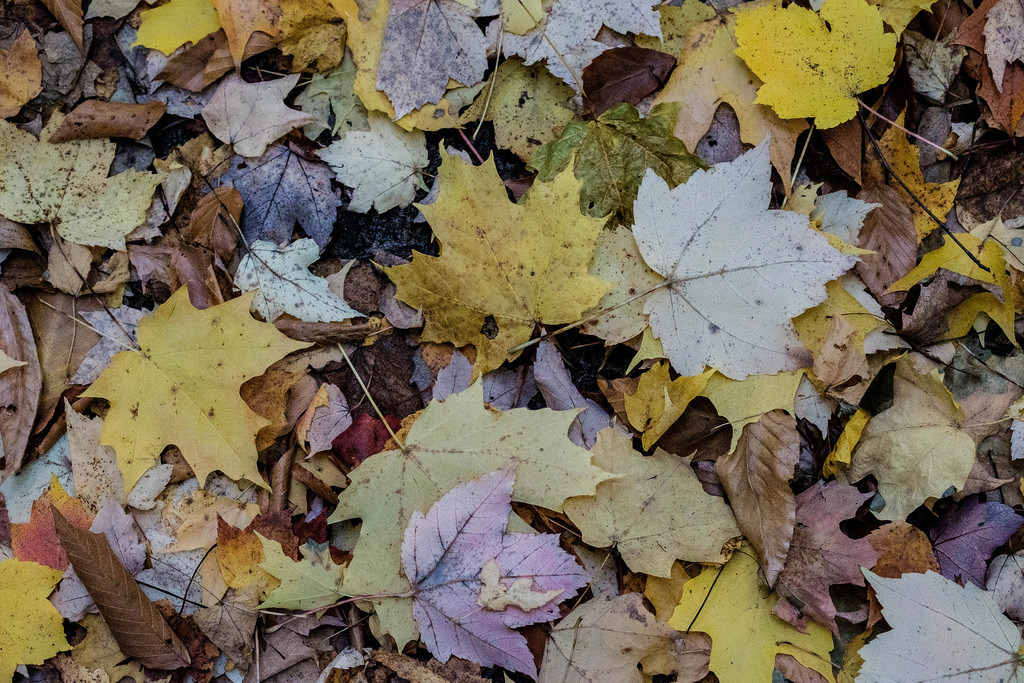 leaves-on-trail