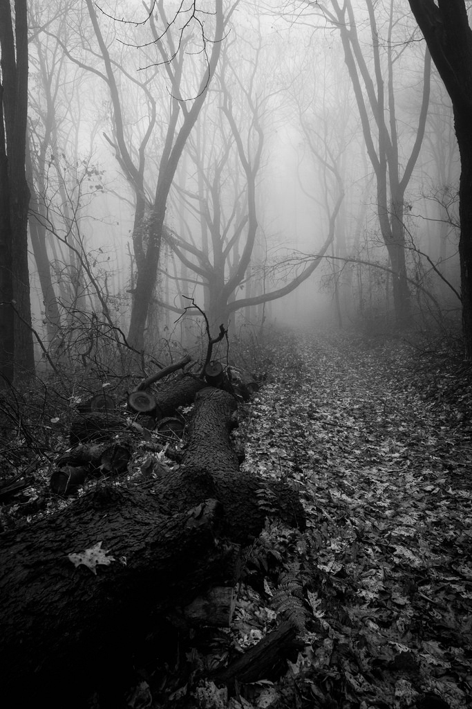 bw_forest_2