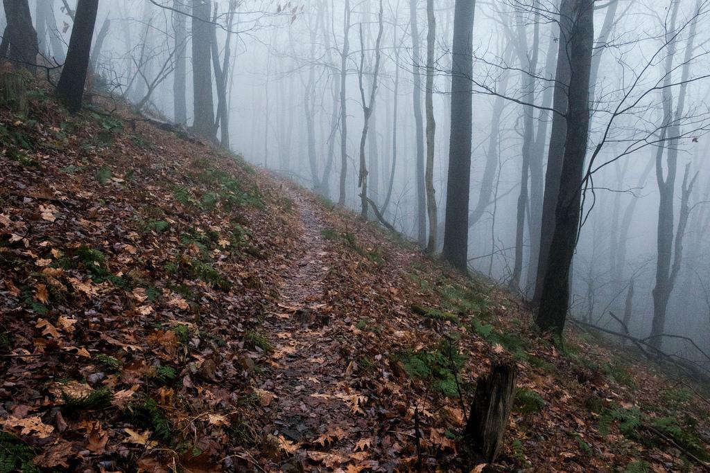 hill-trail-fog