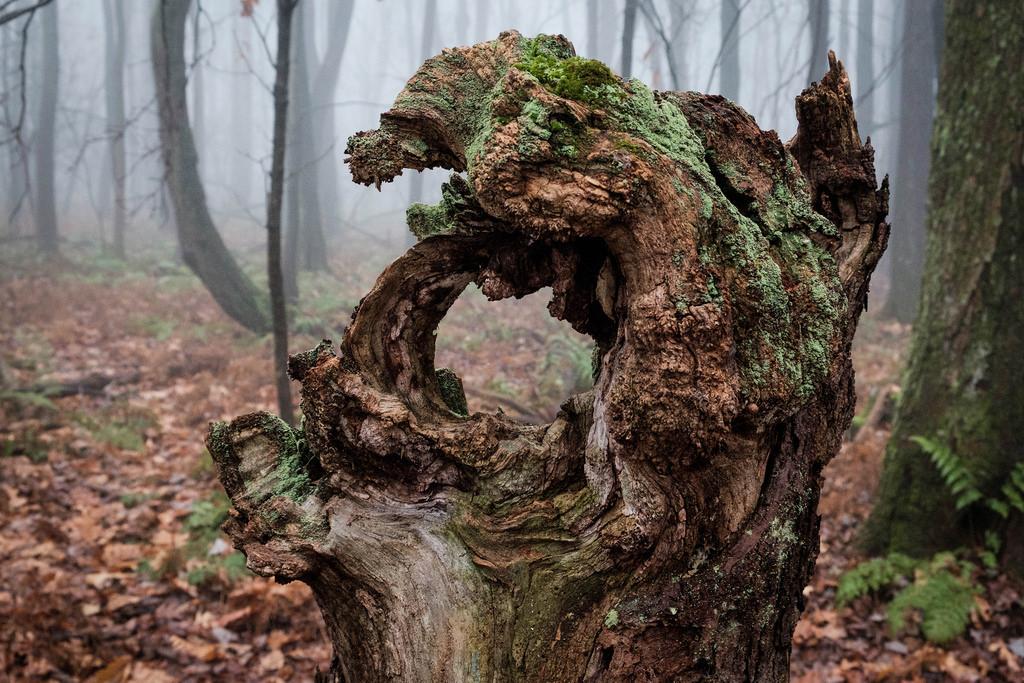 woodsy-glory-hole
