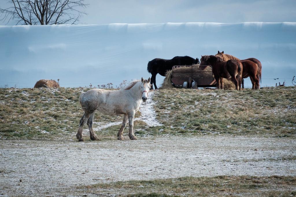 white_horse_coldjpg
