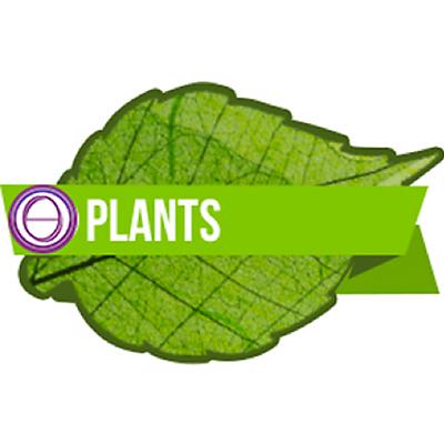 thesolarlogos-monica-righi-theta-healing-corso-piante-plants