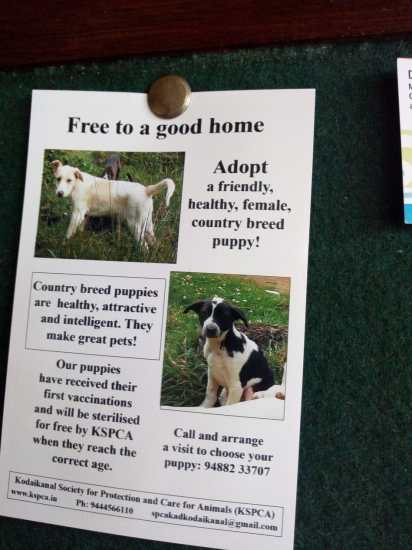 poster to adopt a dog