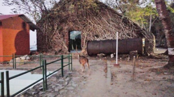 Deer in front of a dilpidated building covered in creepers