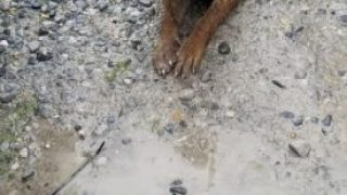 Bài viết - There are so many dogs that need adopting