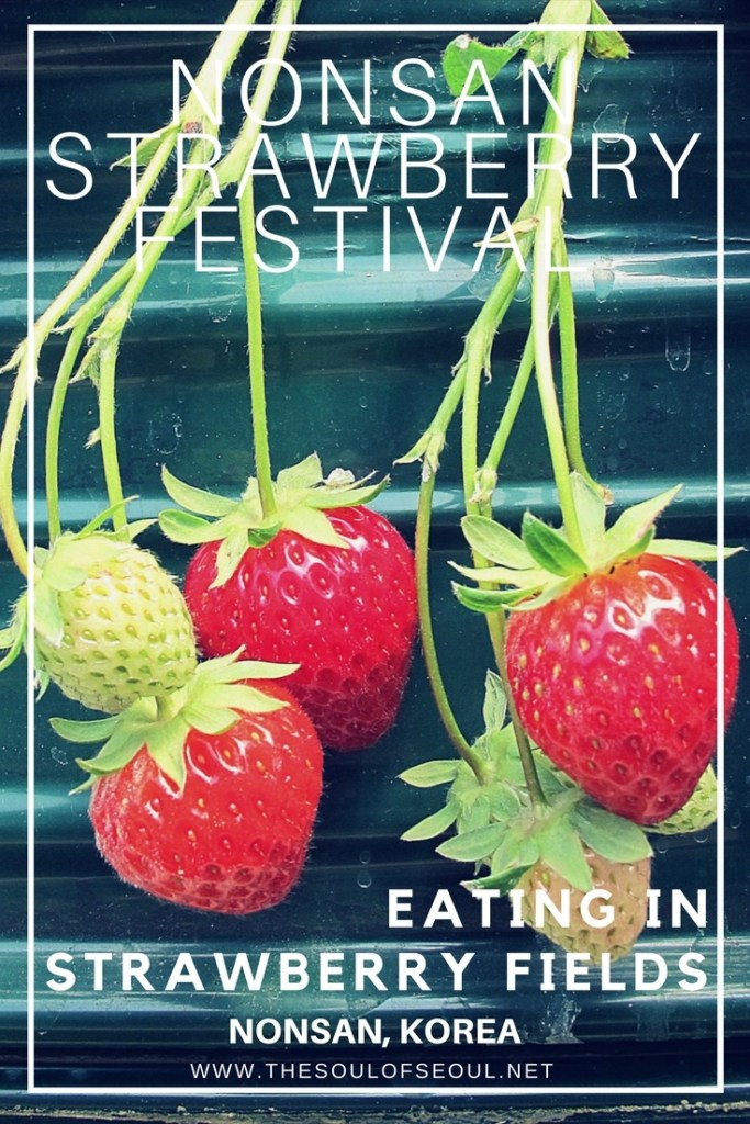 Nonsan Strawberry Festival, Eating in Strawberry Fields: Nonsan, Korea: Nonsan is Korea's largest strawberry producer and the city welcomes people from near and far every spring for the Nonsan Strawberry Festival. Eat in strawberry fields, chocolate covered strawberries and have fun too!