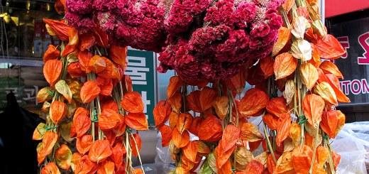 Yangnyeongsi Herb Medicine Market