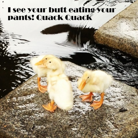 Ducks: Butt eating pants