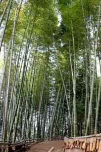 Geoje, Korea: Bamboo Theme Park