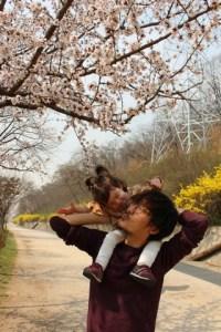 Seoul World Cup Park, Korea cherry blossoms
