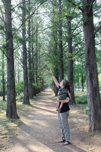 World Cup Park, Sky Park, Soeul, Korea: Meta-sequoia path